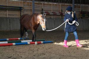 Is mijn paard geschikt als coachpaard?  Doe de voorwaardentest!